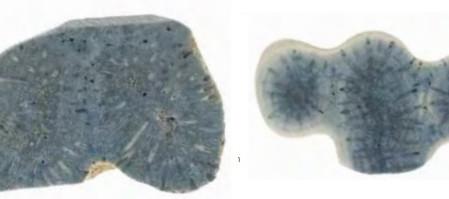 Все о голубом коралле (Blue coral): как отличить, где растет, особенности созданных из него украшени