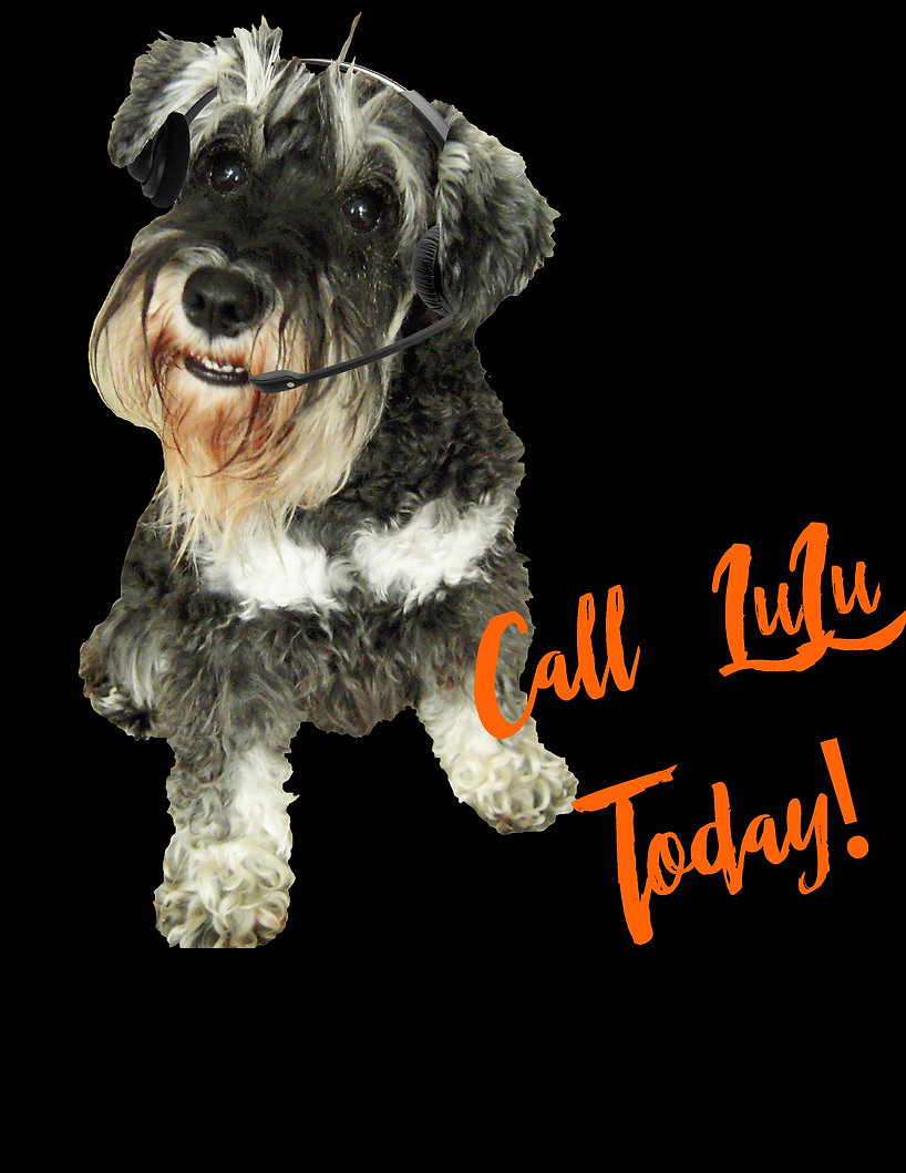 "Mini Schnauzer named LuLu  with headphones ""Call LuLu Today!"""