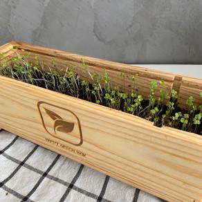 Je teste le potager urbain Happy Green Box