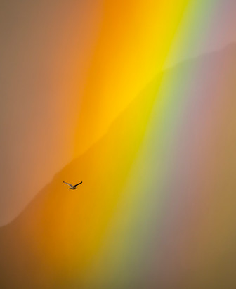 Seagull and Rainbow