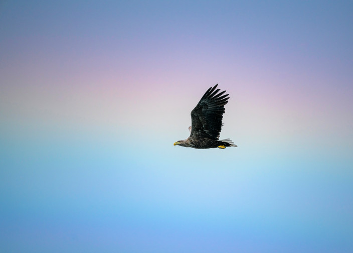 White Tailed Eagle and Rainbow
