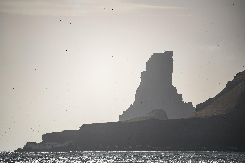 1000 Birds Bjørnøya/Bear Island