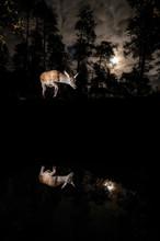 2 x Deer and Full Moon.jpg
