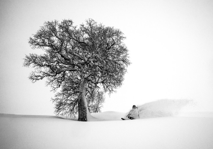 Skier and Tree