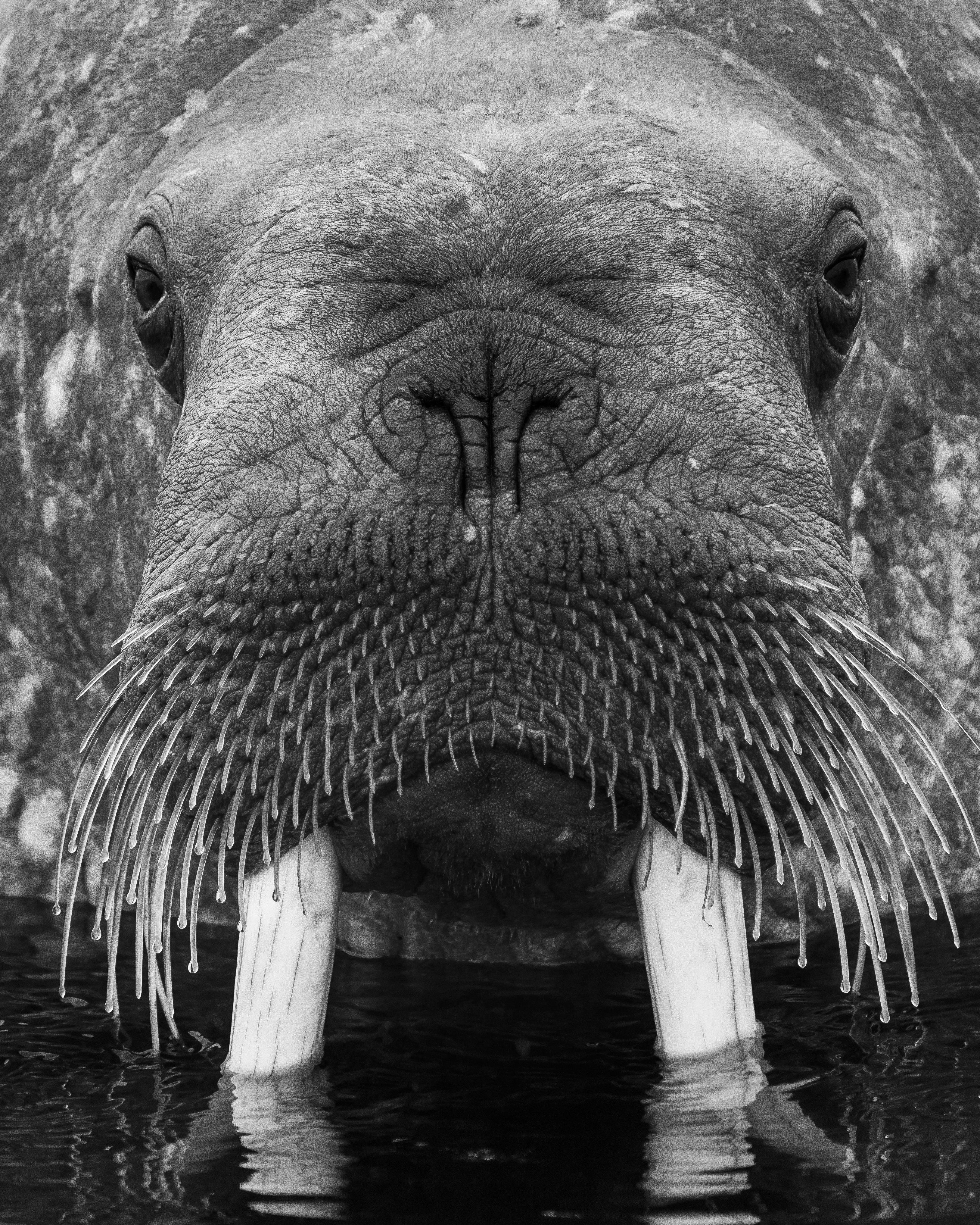 Whalerus portrait