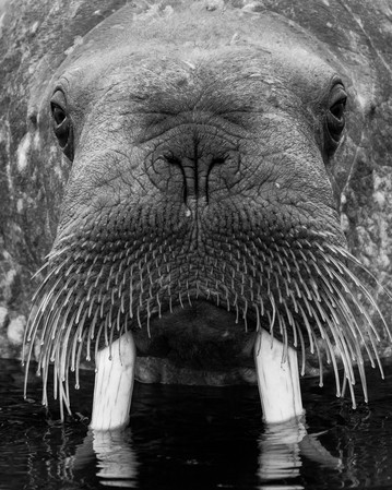 Whaleruss Portrait