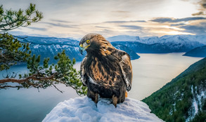 King of the Fjord
