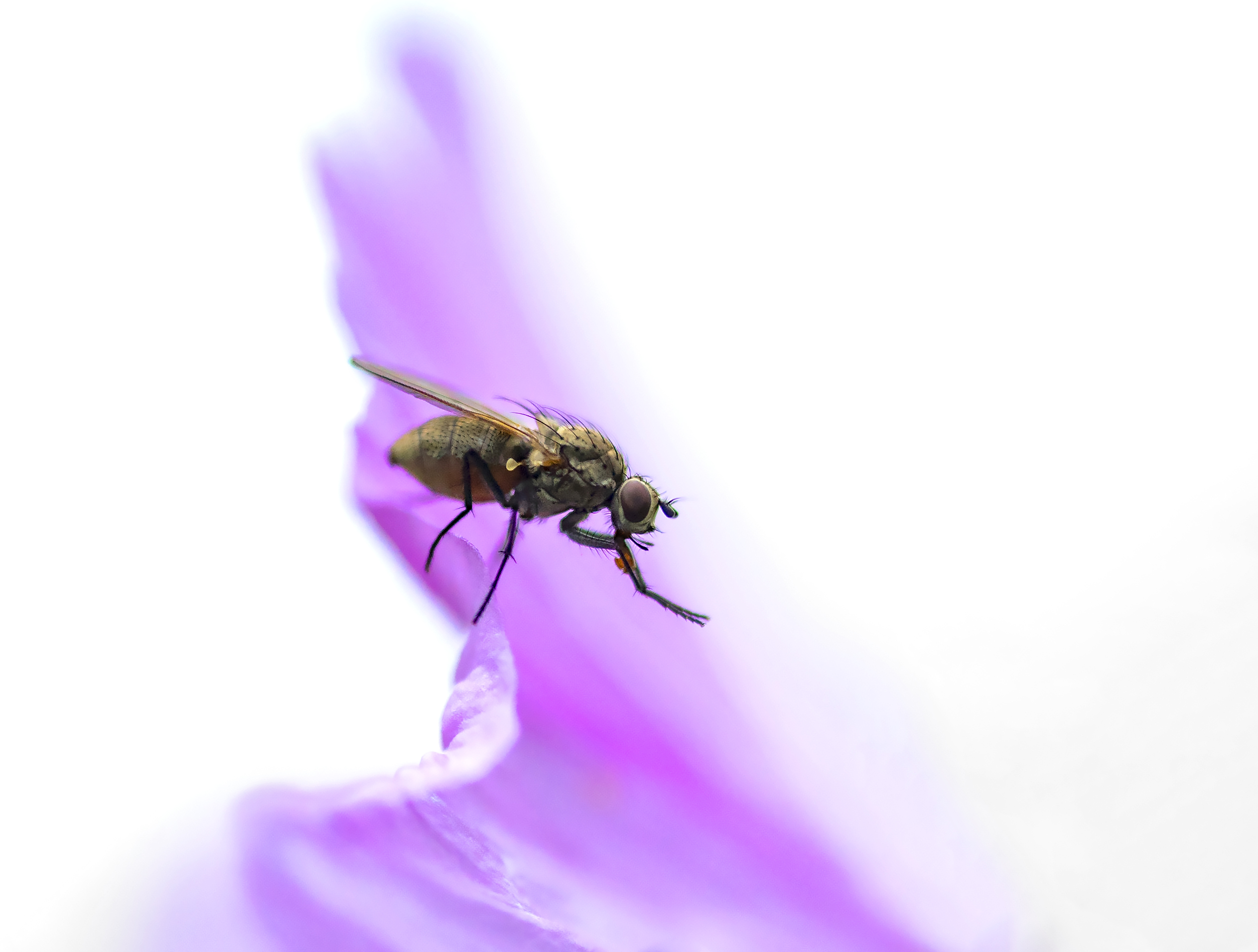 Just a fly on a pink flower