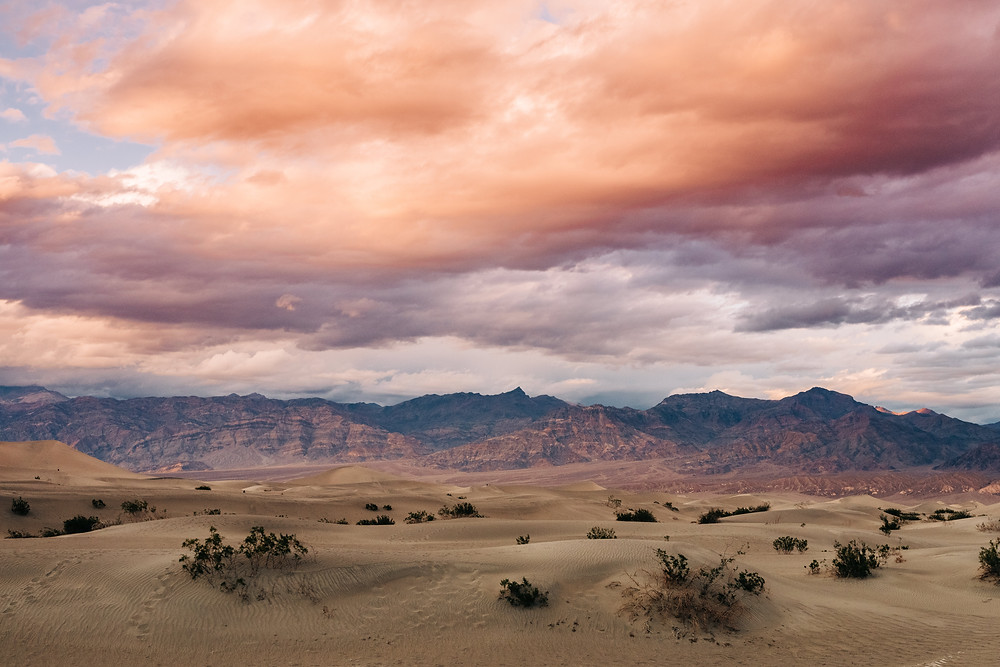 Mesquite flat sand dunes at death valley national park captured by las vegas wedding photographer hayway films. Purple mountains, pink and orange clouds at sunset with the yellow sand and green bushes.