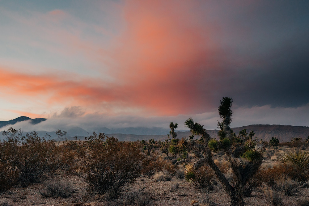 Joshua tree national park at sunset with bright pink & orange sky. Captured by las vegas photographer hayway films