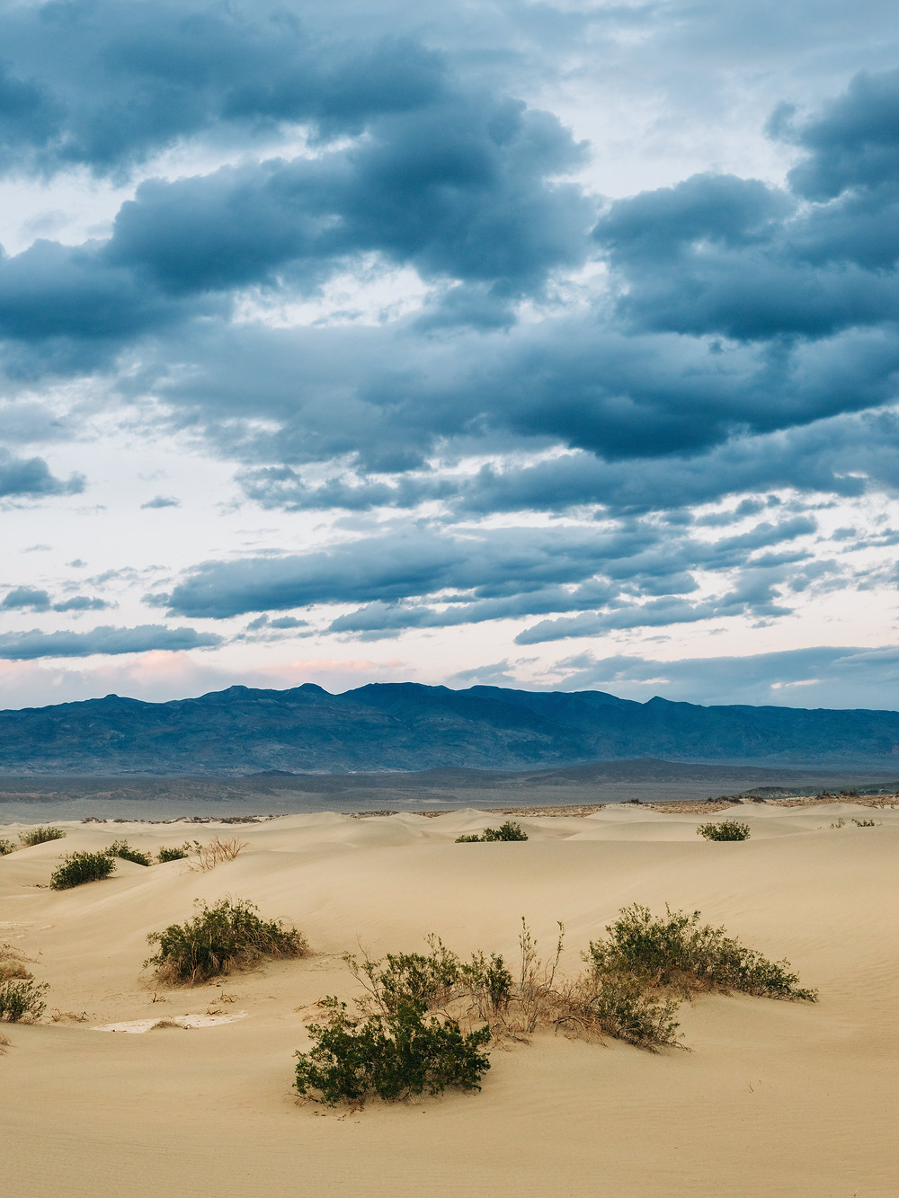 Mesquite flat sand dunes at death valley national park captured by las vegas wedding photographer hayway films. Blue cloudy skies, beige sand, and green bushes.