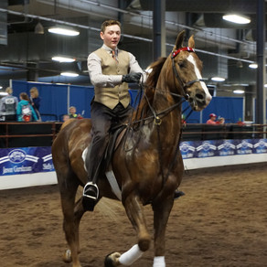 How Horses Can Improve Your College Application
