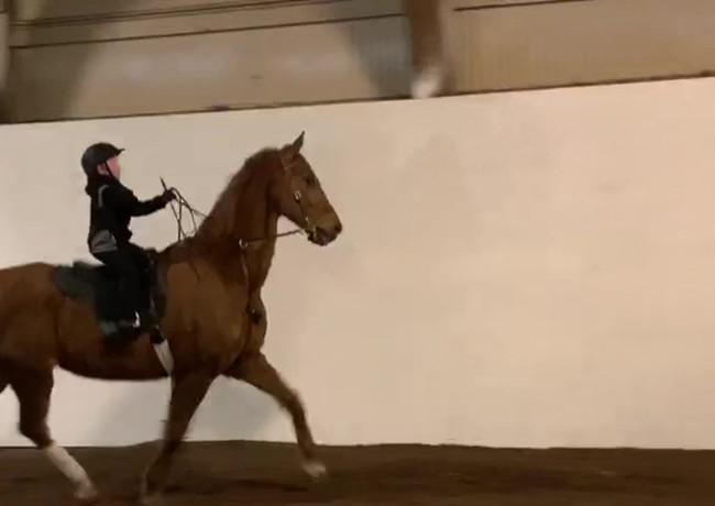 LivRose Tree Farms | Fox Valley Riding Academye Lesson 3.mp4