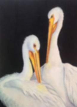 Young White Pelicans,   Watercolor.jpg