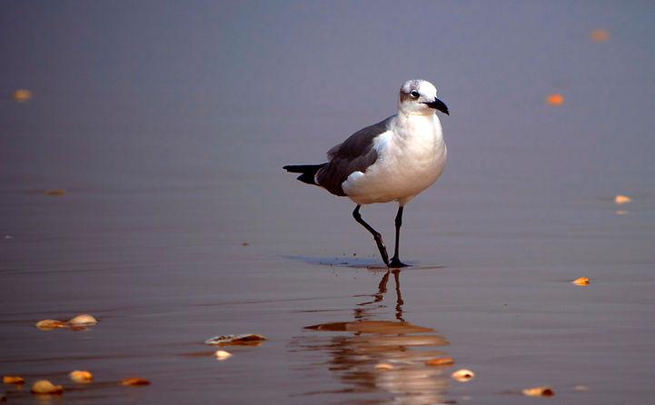 Seagullbeach v1 tm cr lr.jpg