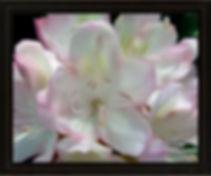 Candy Paint original flower art by Elisa Baker