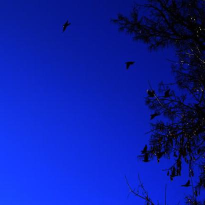 NightGlider.jpg