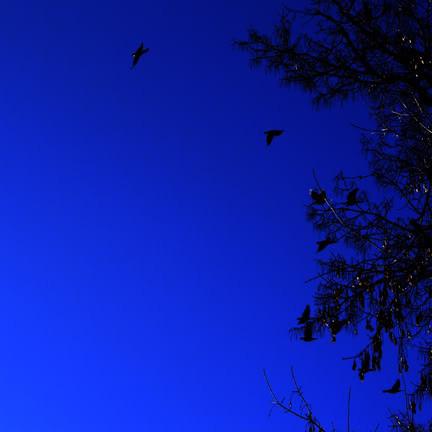 Bats or Birds - Minneapolis Minnesota