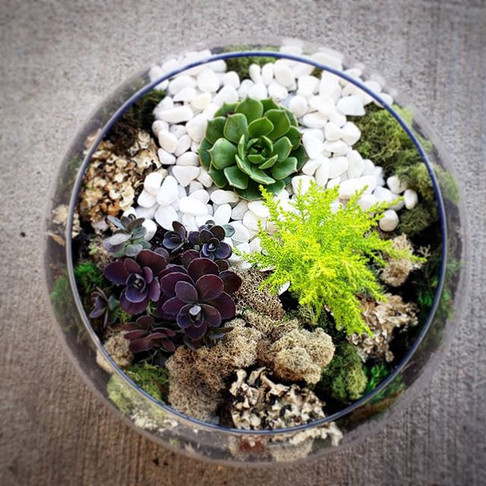 Made another Terrarium! - This one is en