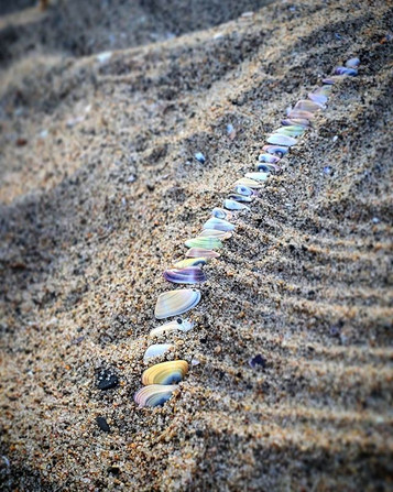 Venice Beach, Rainbow Shells