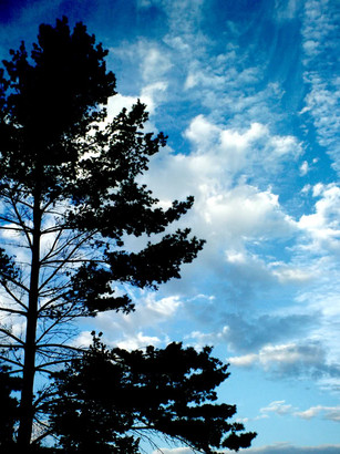 Sky-Treecopy.jpg