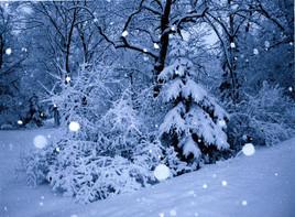 Snowstorm, Minnetonka, Minnestota