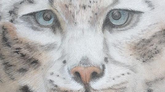 """Art Postcard 6"""" x 9"""" Snow Leopard"""