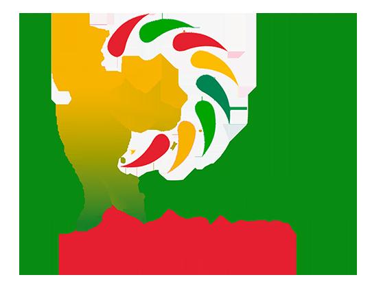 DG Color Logo