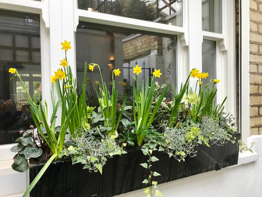 Container planting with bulbs