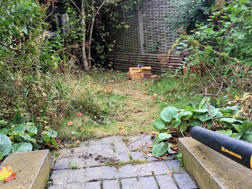 Diarmuid Gavin and the importance of garden maintenance