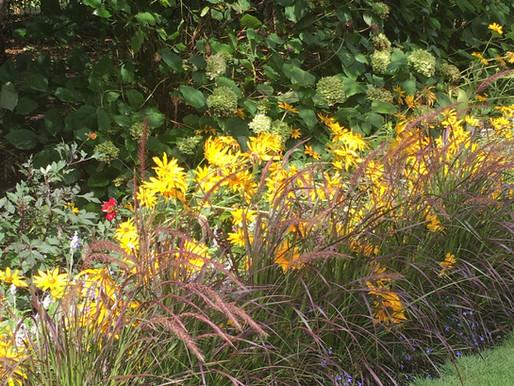 Rudbeskia plant combination