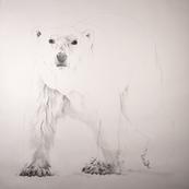 The Vulnerable Polar Bear