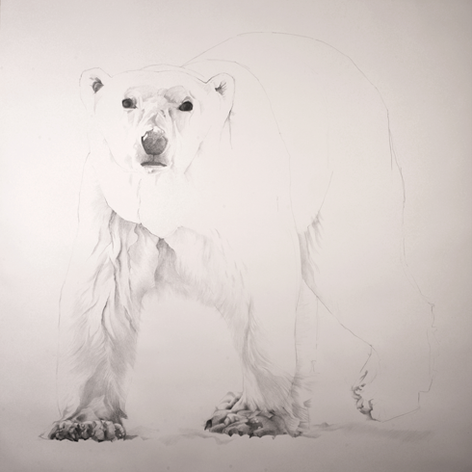 The Vulnerable Polar Bear