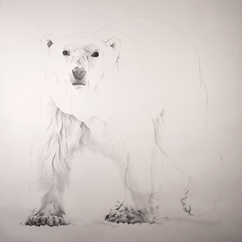 'The Vulnerabe Polar Bear'