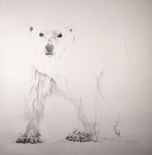 'The Vulnerabe Polar Bear'