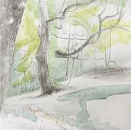 'Woodland Intrigue'