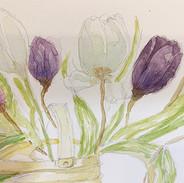 Tulips by Jayne.JPG