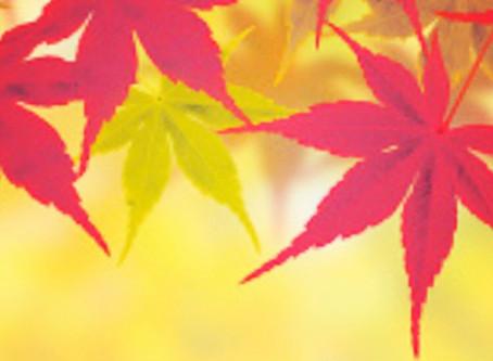 秋の抜け毛と乾燥