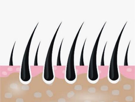 頭皮と髪の毛の関係