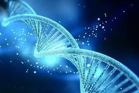 シータヒーリング®︎基礎DNAセミナー開催します!
