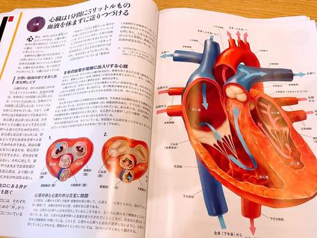 アナトミー6日目《心臓》