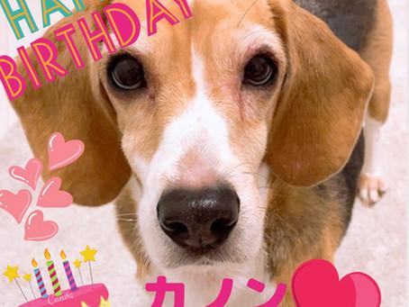 保護犬カノンの誕生日💖