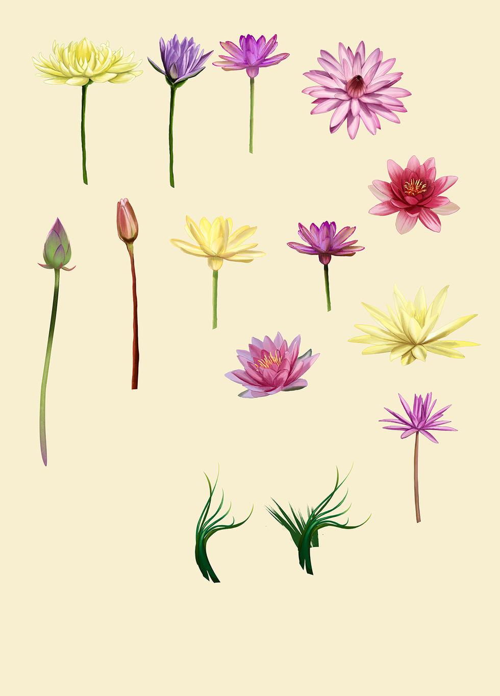 Flores-vitória-régia-finais-SITE.jpg