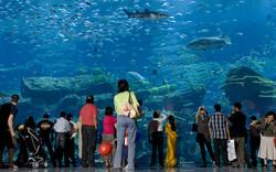 Аквариум  Dubai Mall