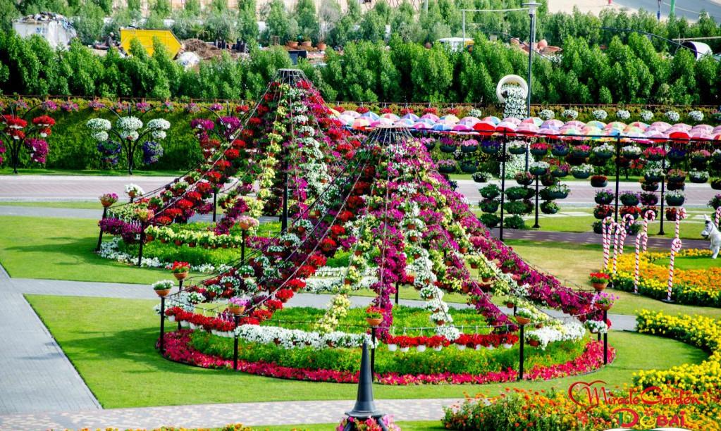 сад цветов эмираты