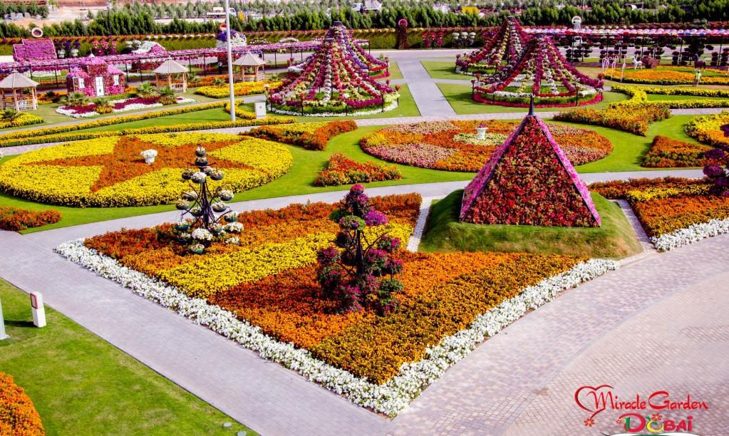 сад цветов, парк бабочек