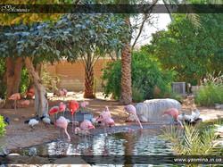 flamingo, Аль Айн, экскурсии дубай