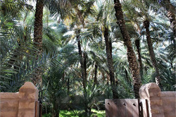 Al-Ain-Oasis-United-Arab-Emirates