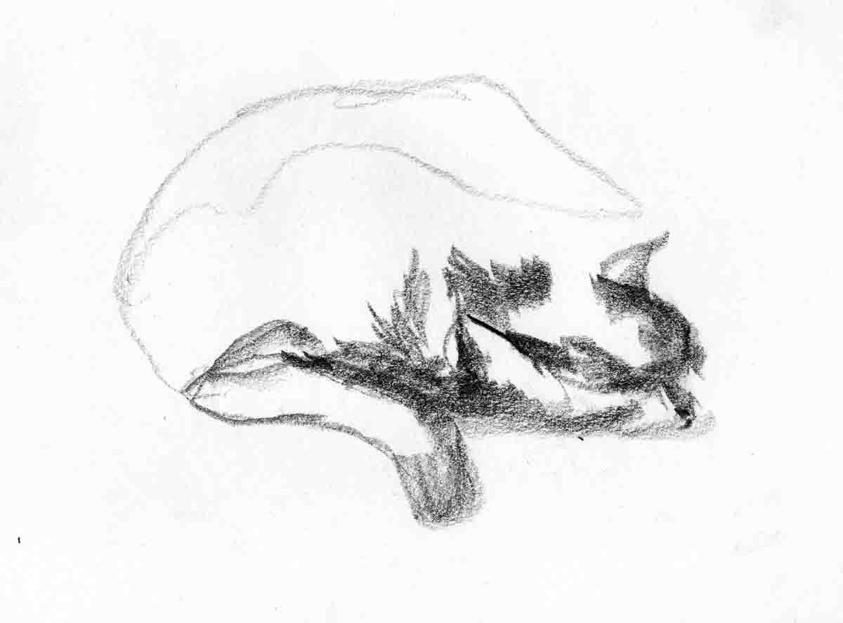 Chat endormi - 2