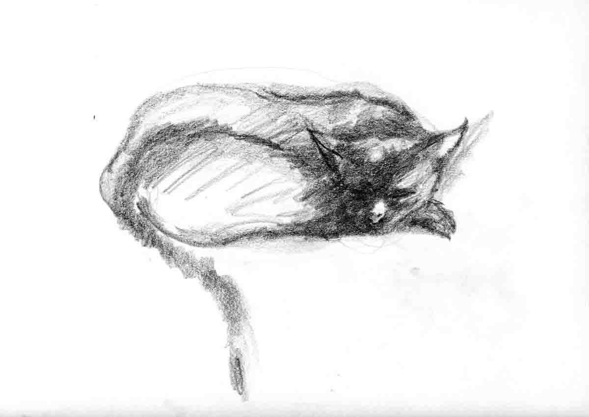 Chat endormi -1